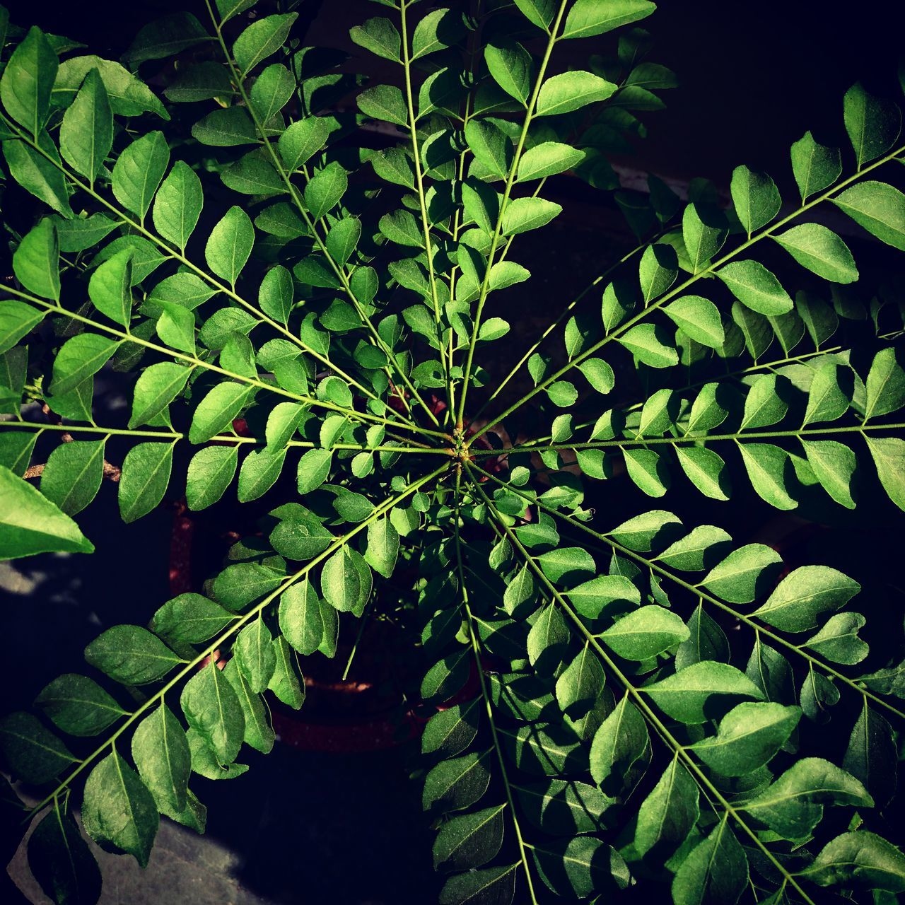 Save Plants Nature Save Earth Save Planet Save Nature  Naturelover Trees Plants Green Leaves India Herbal