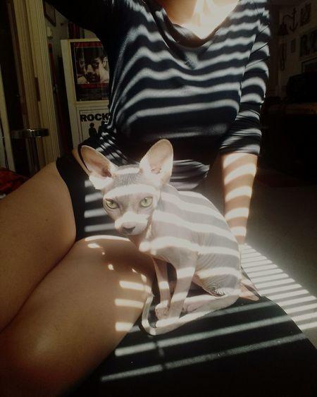 Me&Pina Striped Zebra Stripes Sphynx Cat Sphynxlove Sphynx