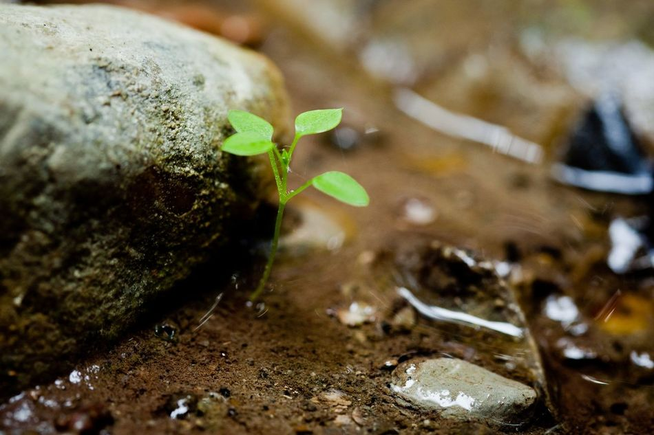 Beautiful stock photos of plant, Beginnings, Day, Freshness, Green Color