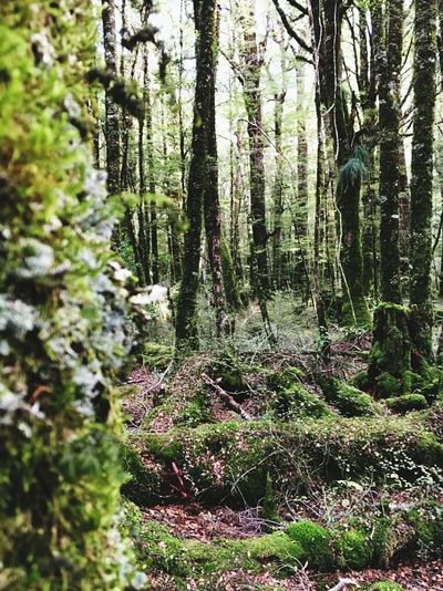 Rain Forest Travel Photography Feel The Journey Newzealand Wanderlust Adventure Hello World