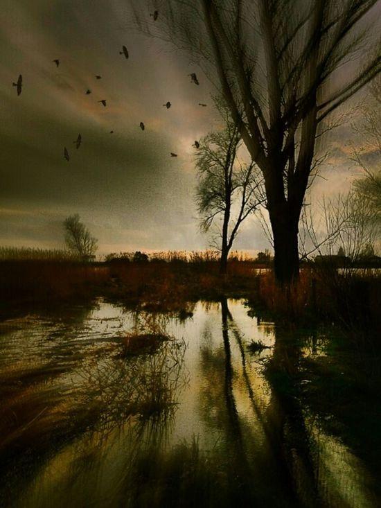 Dark Nature Crows Dutch Light Dutch Landscapes