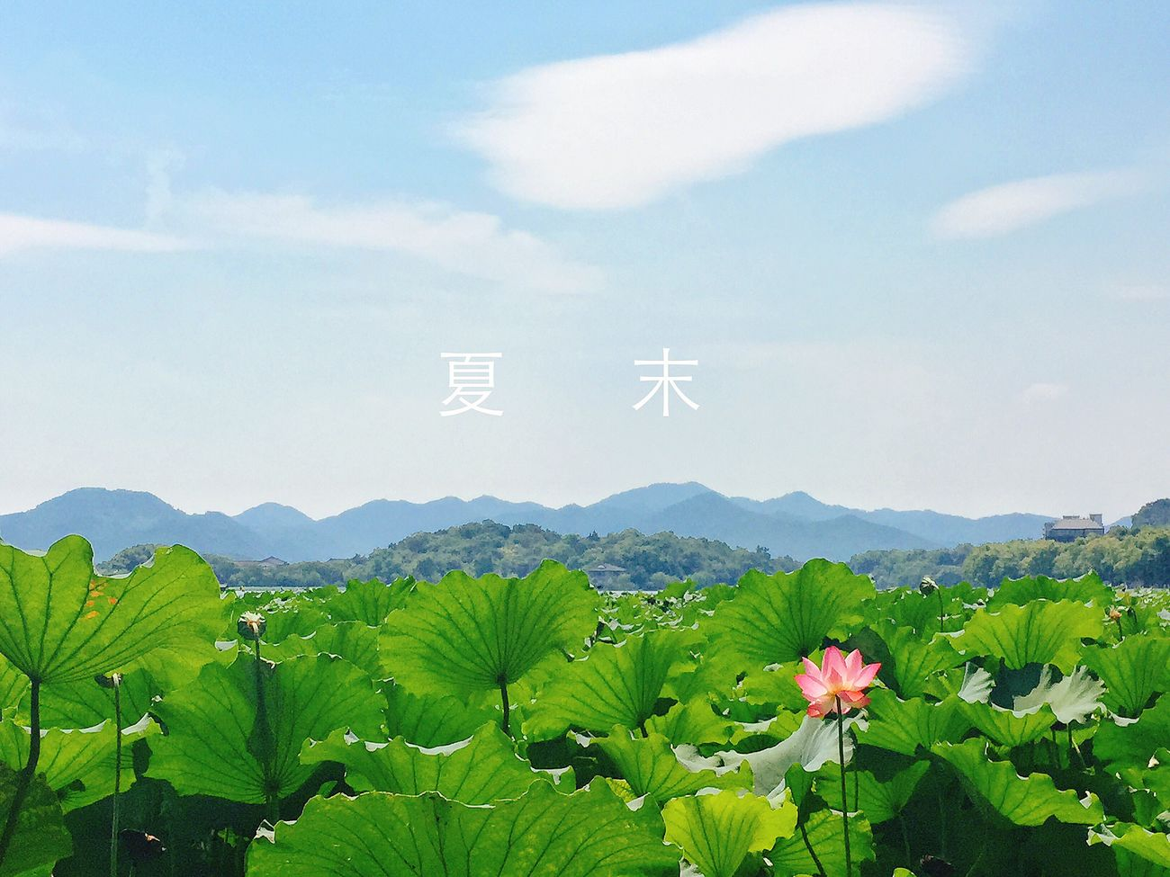 the summber in hangzhou!it's hot,but I love this city!It's my hometown. Beauty In Nature Sky Hello World