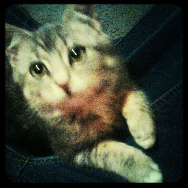 My New Kitty :)