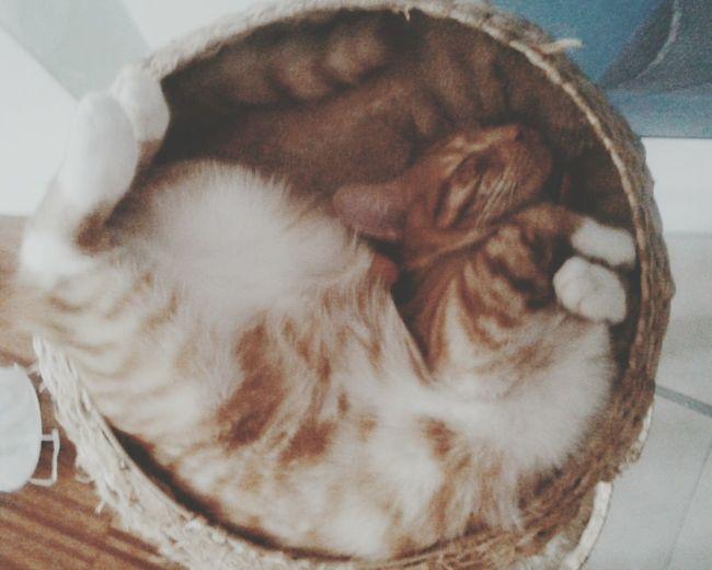 Cat Love Animal