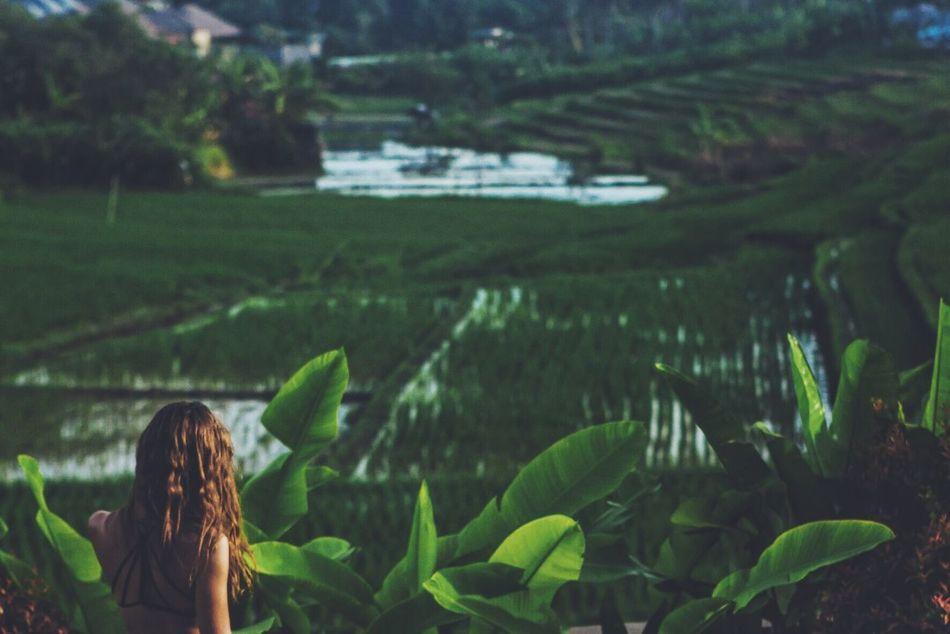 Beautiful stock photos of bali,  Beauty In Nature,  Crop,  Cultivated Land,  Day