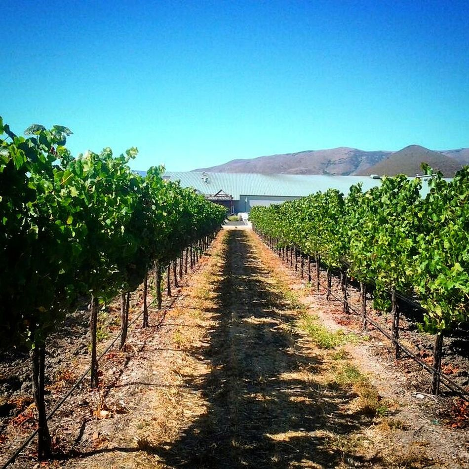 Taking Photos Wine Vinyard Where Do You Swarm? Landscape Photography