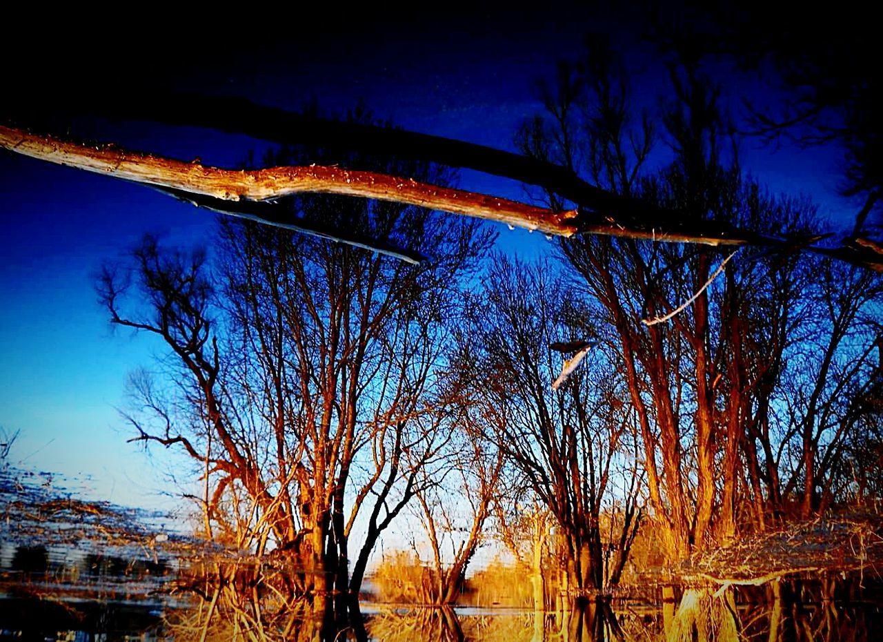 tree, bare tree, nature, no people, branch, outdoors, blue, sky, beauty in nature, day