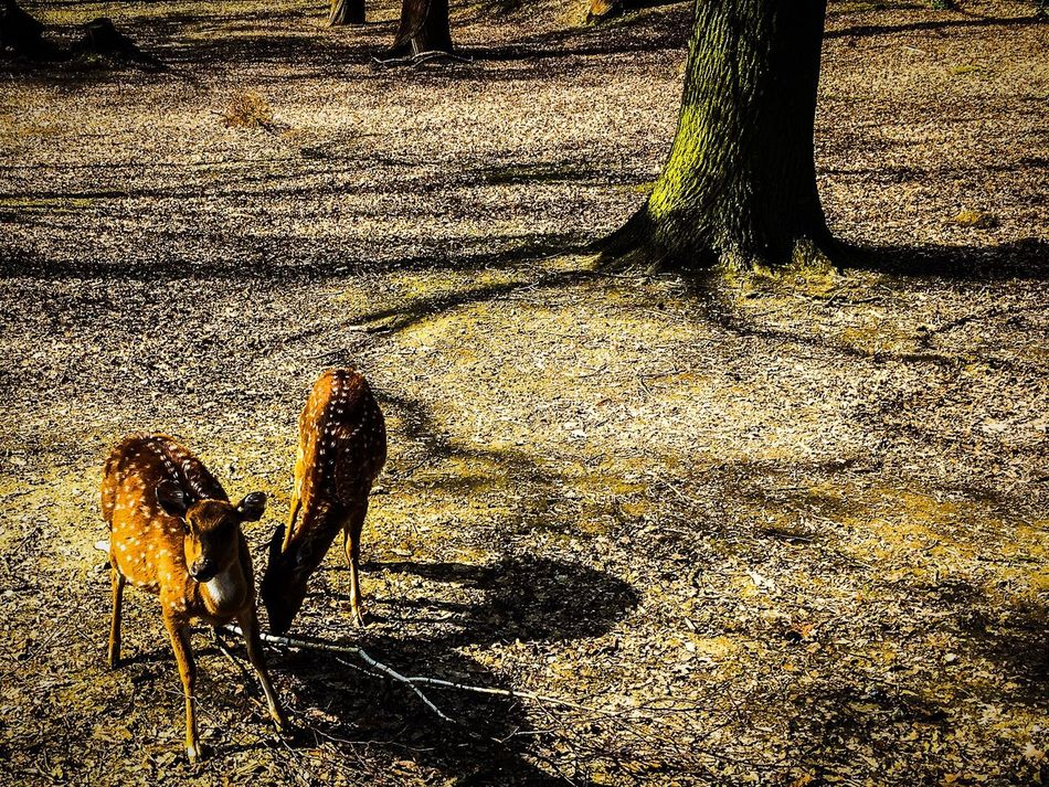 Animal Themes Bambi Day Outdoors No People Nature Sunlight Natural Beauty Nature Tree Trees Forest Focus Forest Photography Forest Trees Forest Animal