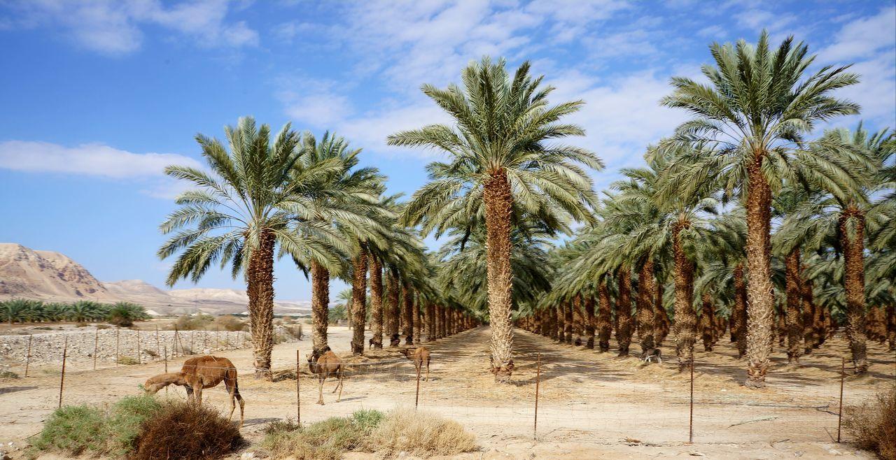 israel Desert Deadsea