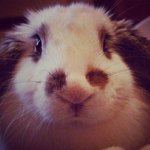 #bunny #bunnylove #bunnystagram #rabbit #rabbitsofinstagram #instapet #instarabbit #instacute #petsofinstagram #petlover #animallove #animalsaddict #animals #cutepet #zoja #polska #poland Animalsaddict Bunnystagram Animals Zoja Rabbit Poland Polska Bunny  Instapet Instacute Petsofinstagram Petlover Instarabbit Animallove Cutepet Rabbitsofinstagram Bunnylove