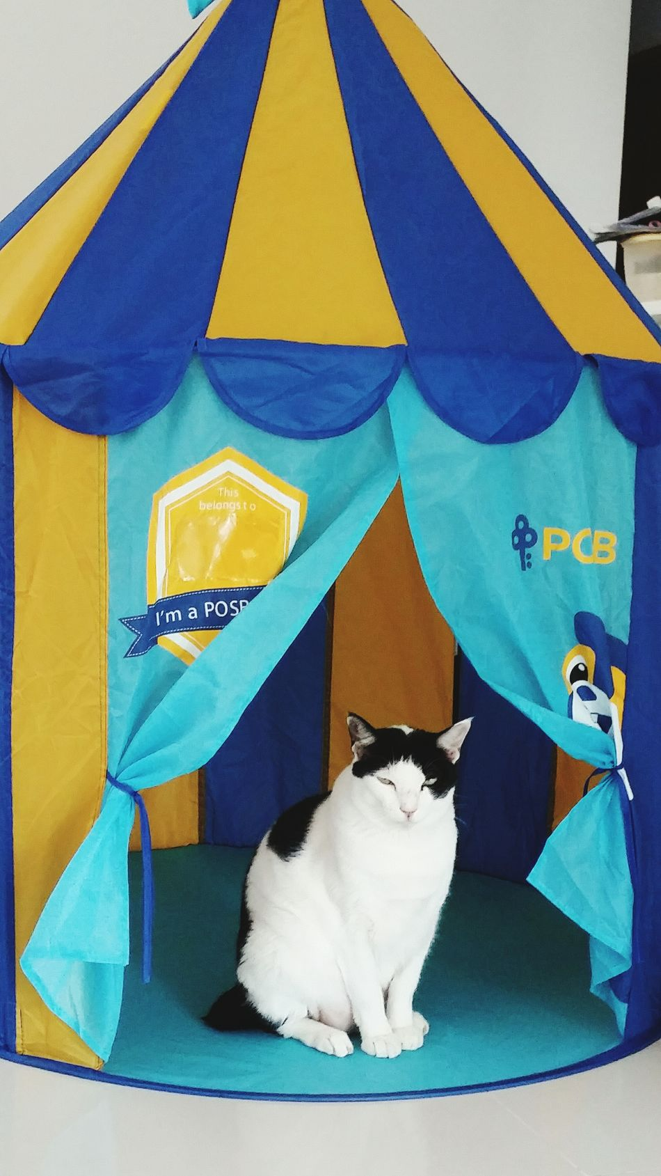 Pets Cat Black & White No People Feline Domestic Cat Indoors  One Animal Tent Sitting Down Small Eyes Pointy Ears Domestic Animals