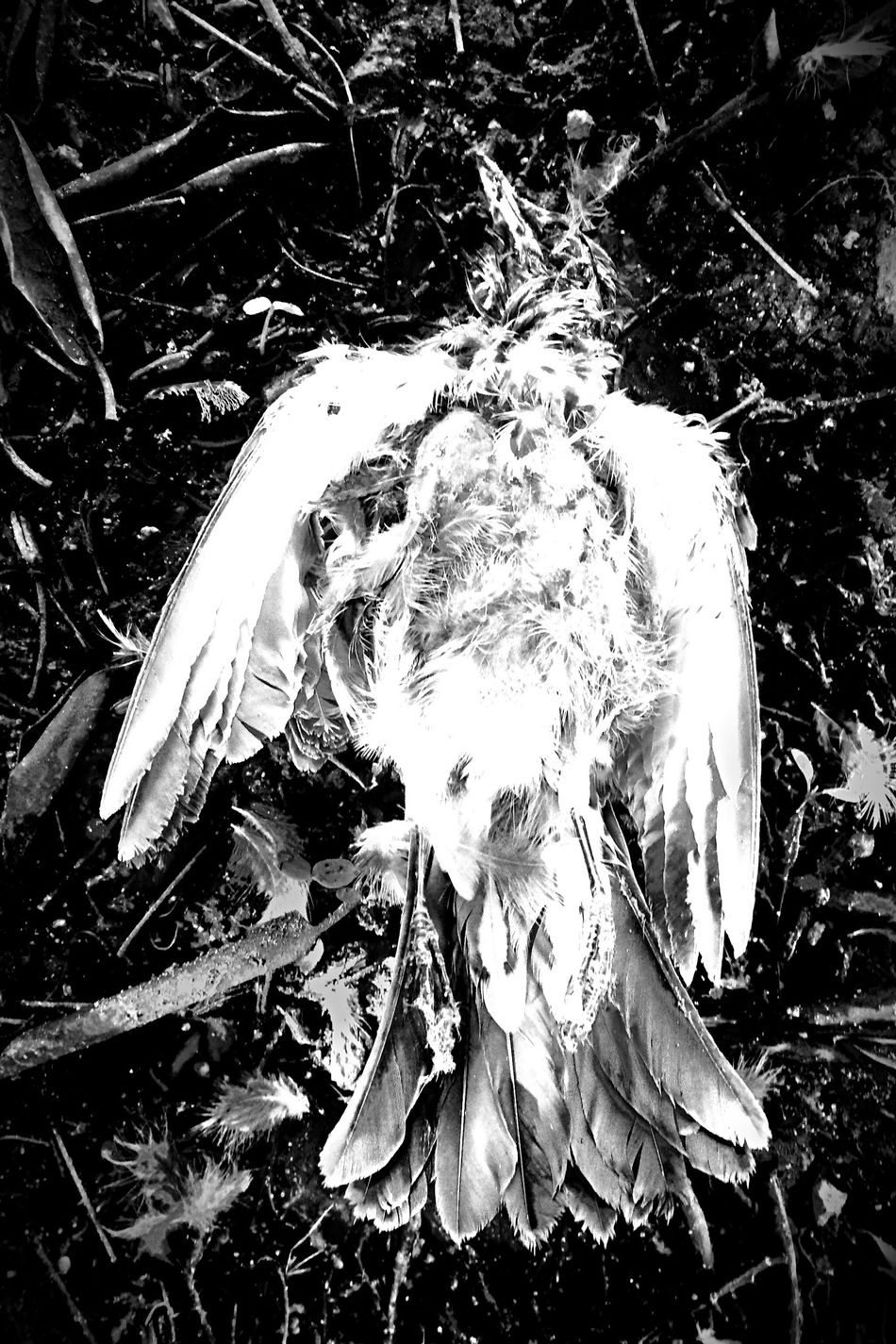.::Angel::. DCLXVI Beauty Of Decay Black And White Death
