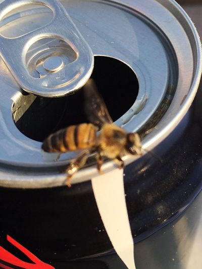 The Great Outdoors - 2016 EyeEm Awards Nature's Diversities No People Non-alcoholic Beverage Bee 🐝 IPhoneography Close Up Thirsty Bee Detail Taken With IPhone 6 Adapted To The City