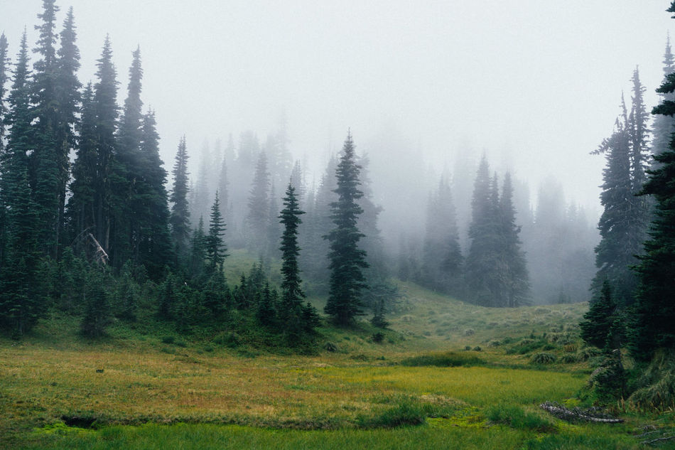 Beauty In Nature Cold Temperature Coniferous Tree Day Fog Forest Grass Growth Landscape Lush - Description Mountain Nature No People Non-urban Scene Outdoors Pinaceae Pine Tree Scenics Tranquil Scene Tranquility Travel Destinations Tree Winter