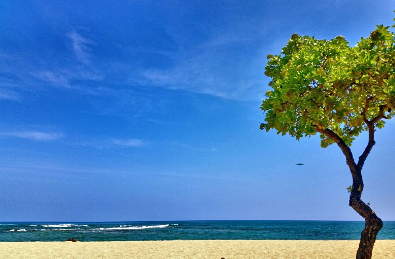 sea, horizon over water, beauty in nature, tranquility, scenics, nature, tranquil scene, blue, sky, water, outdoors, beach, tree, no people, day