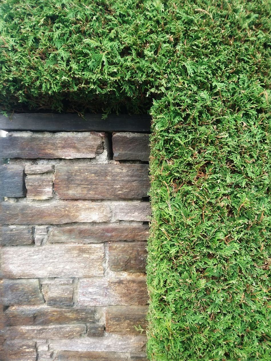 Green Color Growth Nature No People Outdoors Plant Day Ivy Beauty In Nature Creeper Plant Wall Stones Stone Material Wall - Building Feature Hedge Live Fence EyeEm Diversity