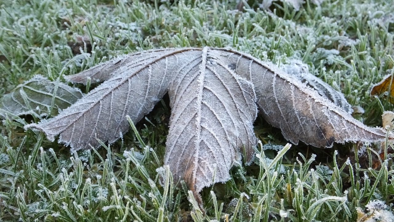 Grass Nature No People Outdoors Close-up Day Frost Frosty Auntumn EyeEm Best Shots Outdoor Photography Nature Photography Leaves Grass Field Green Cold Close Up Water Ice Leaf Single Object EyeEm Nature Lover EyeEm Best Shots - Nature Fall Leaves