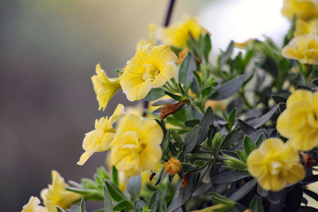 Beauty In Nature Blossom Close-up Flower Fragility Freshness Growth Petal Plant Selective Focus Yellow