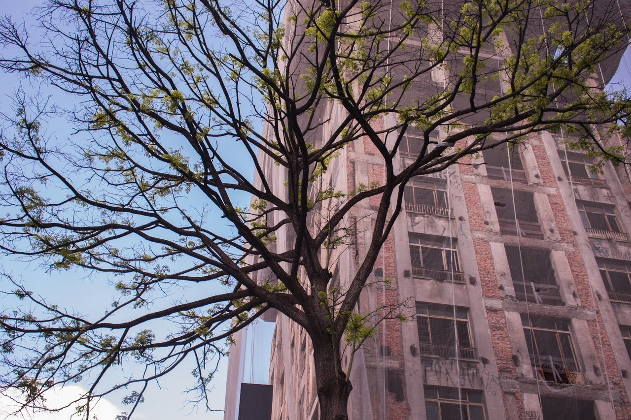 🏢🏢 Tree Buildings & Sky Arvore Prédio  Construction Construção Minimalist Architecture