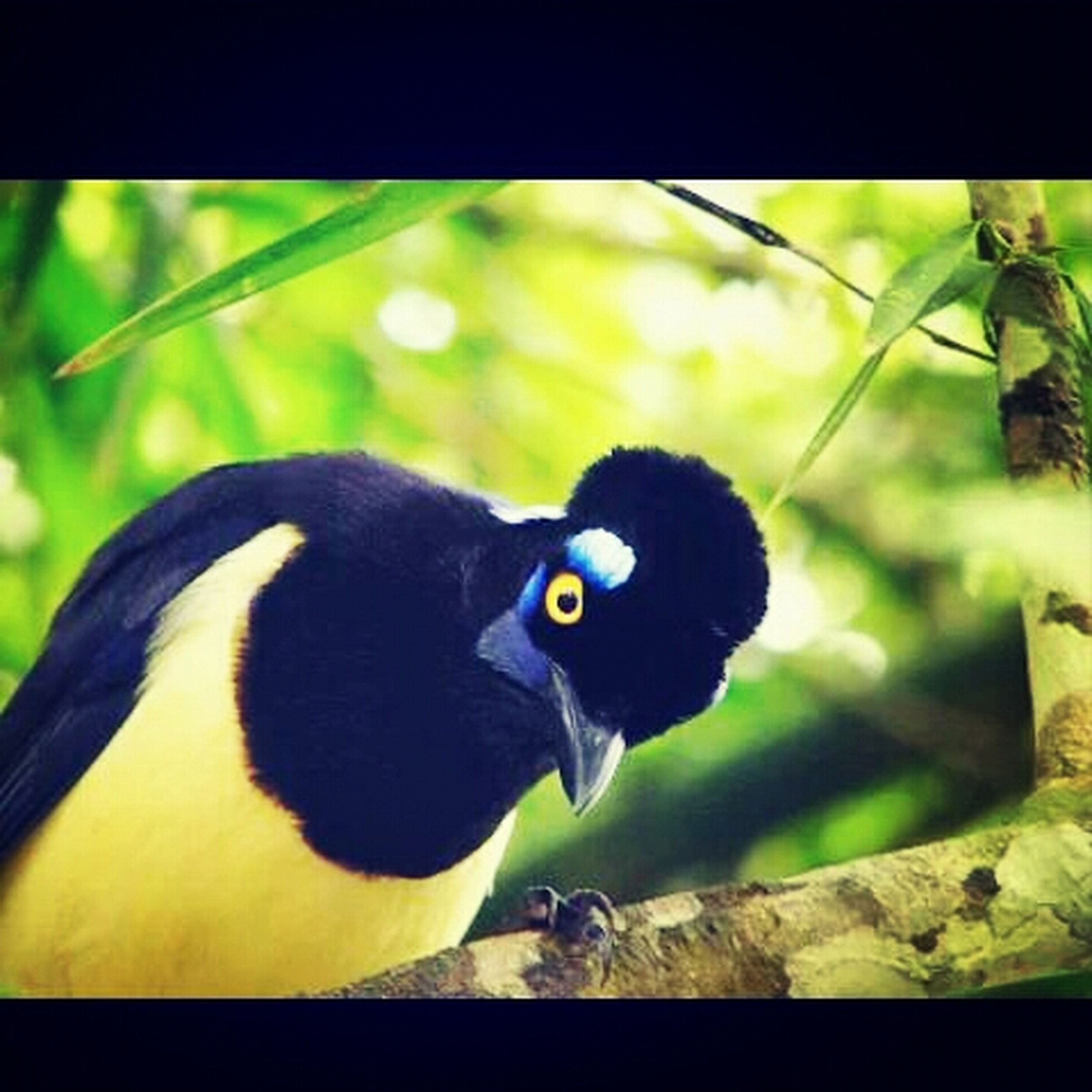 animal themes, bird, one animal, animals in the wild, close-up, black color, wildlife, focus on foreground, perching, transfer print, green color, beak, looking at camera, nature, auto post production filter, branch, outdoors, portrait, no people, pigeon