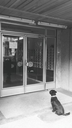 NO DOGS ALLOWED. Good dog waiting for the owner Waiting City Life Cute NO DOGS ALLOWED! Hungary Animal Themes Door Entrance Forbidden Forbidden Area Cute Pets Reflecion Pet Simplycity Dog Patience Good Behaviour Light And Reflection