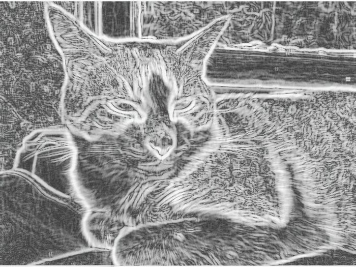Cat Cats Cat♡ Cat Watching Animal Photography Animals Animal Love Animal Themes