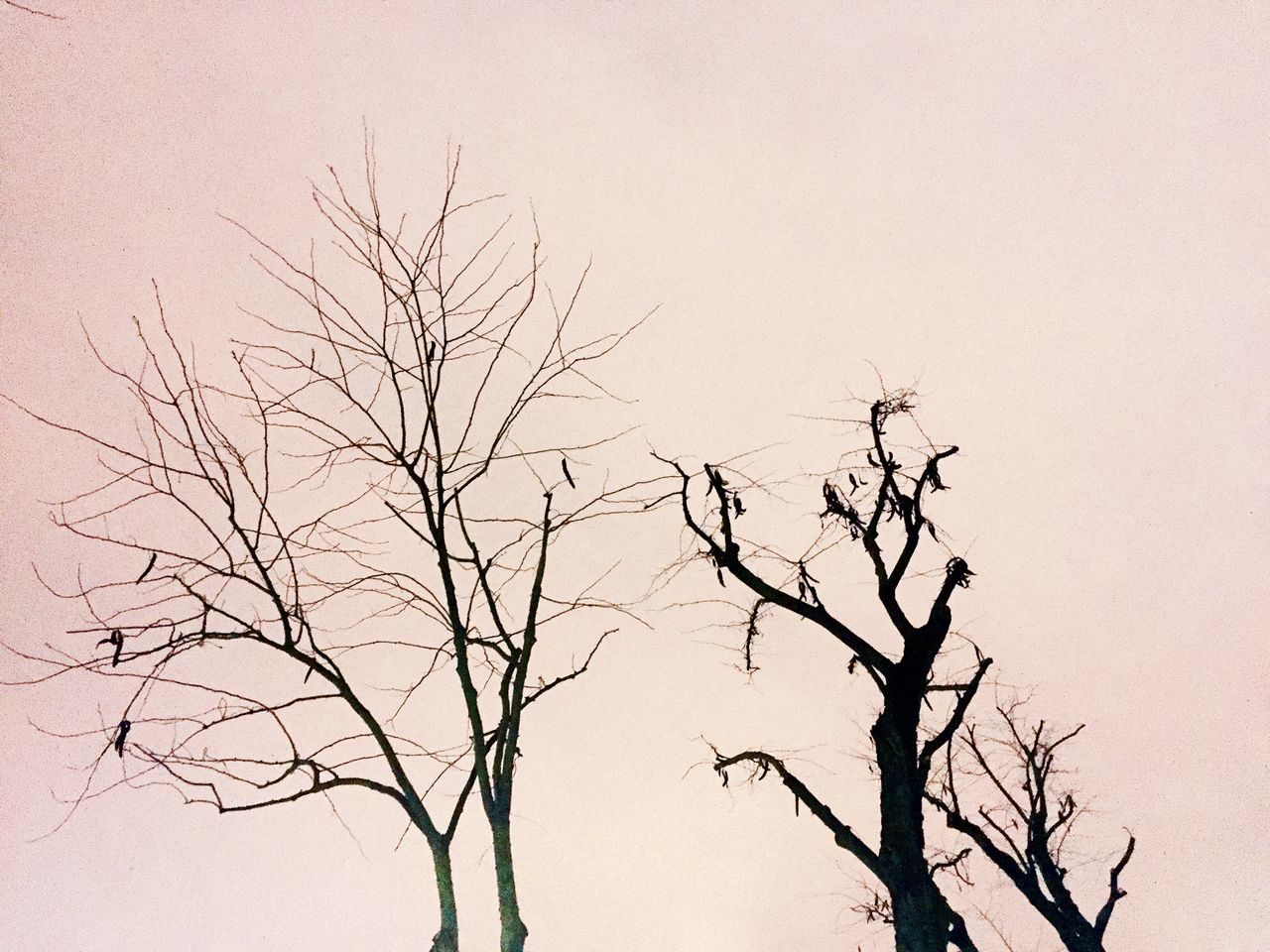 bare tree, branch, tree, nature, tranquility, beauty in nature, clear sky, low angle view, no people, outdoors, day, sky