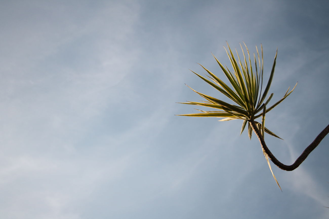 Beauty In Nature Clean Day Growth Letter Low Angle View Minimalism Nature No People Outdoors Palm Frond Palm Tree Perspective Scenics Sky Tree