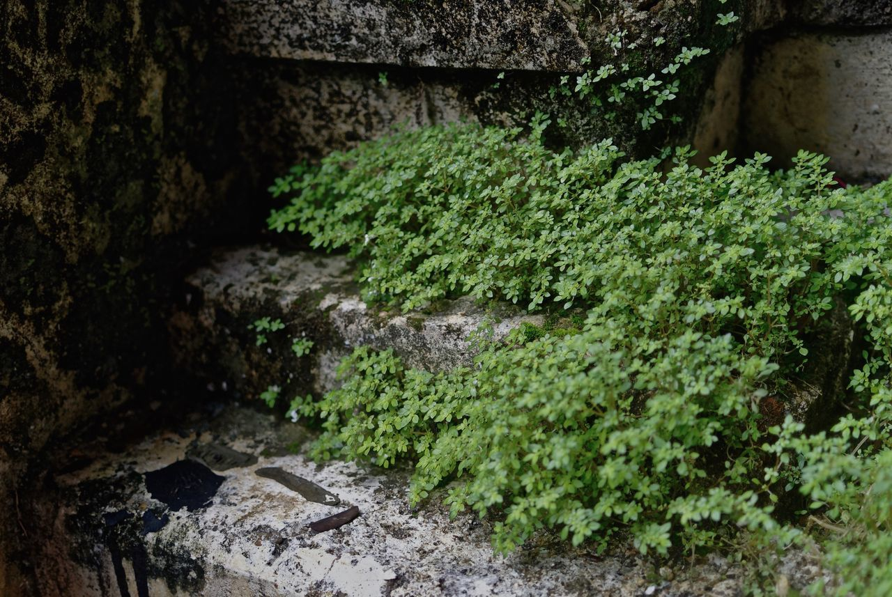 water, no people, plant, moss, rock - object, nature, outdoors, growth, green color, day, beauty in nature, close-up, freshness