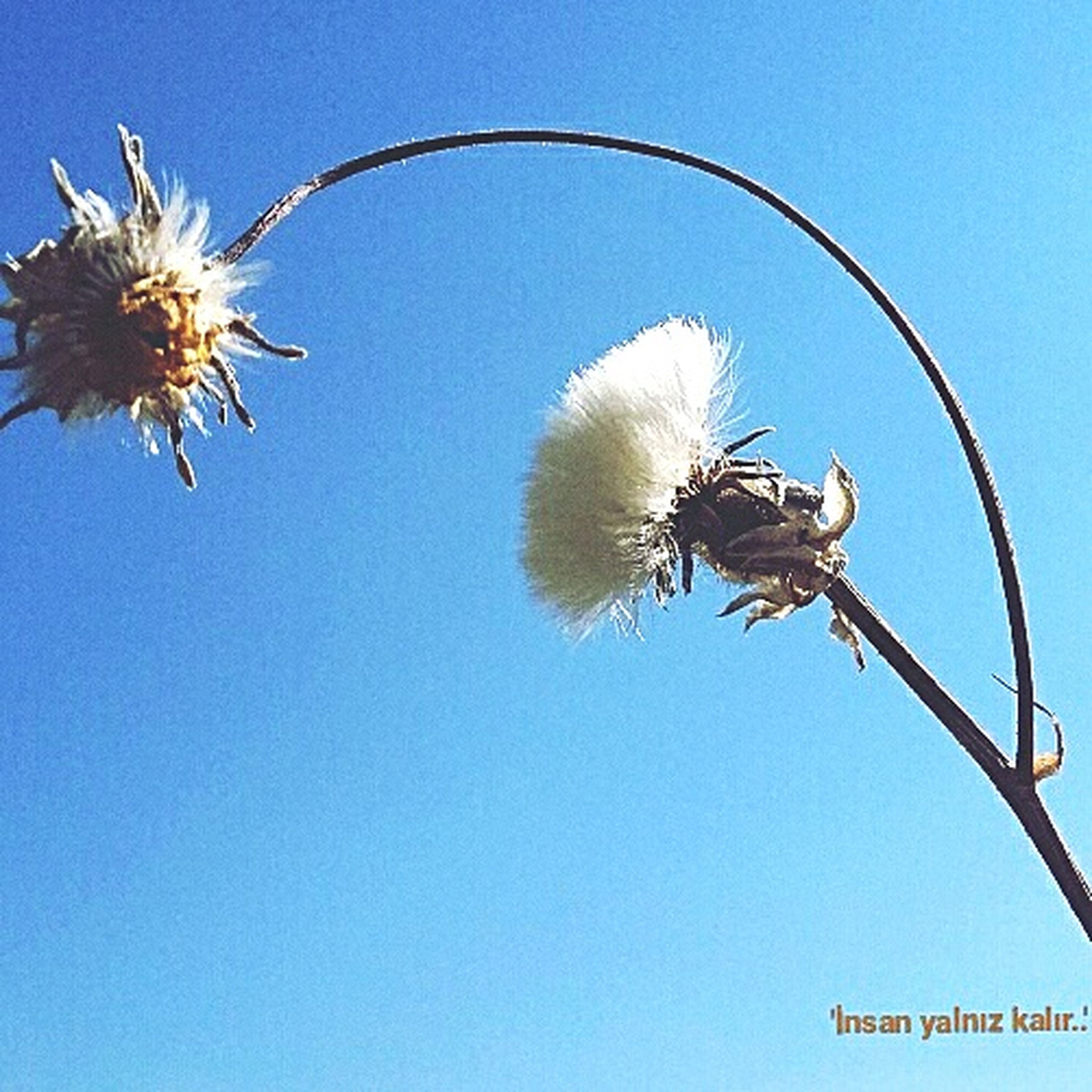flower, clear sky, day, nature, low angle view, outdoors, blue, growth, fragility, no people, beauty in nature, flower head, close-up, freshness, sky
