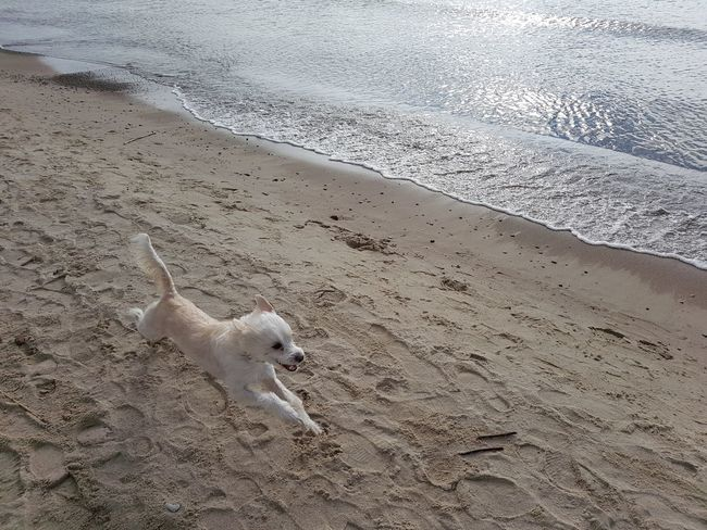 Sand Animal Themes Beach High Angle View Animals In The Wild One Animal Nature No People Day Outdoors Bird Sea Water Mammal Baltic Sea Klaipeda Beauty In Nature Animal Wildlife Nature Animals In The Wild Flying Dog Dog Love Dogslife
