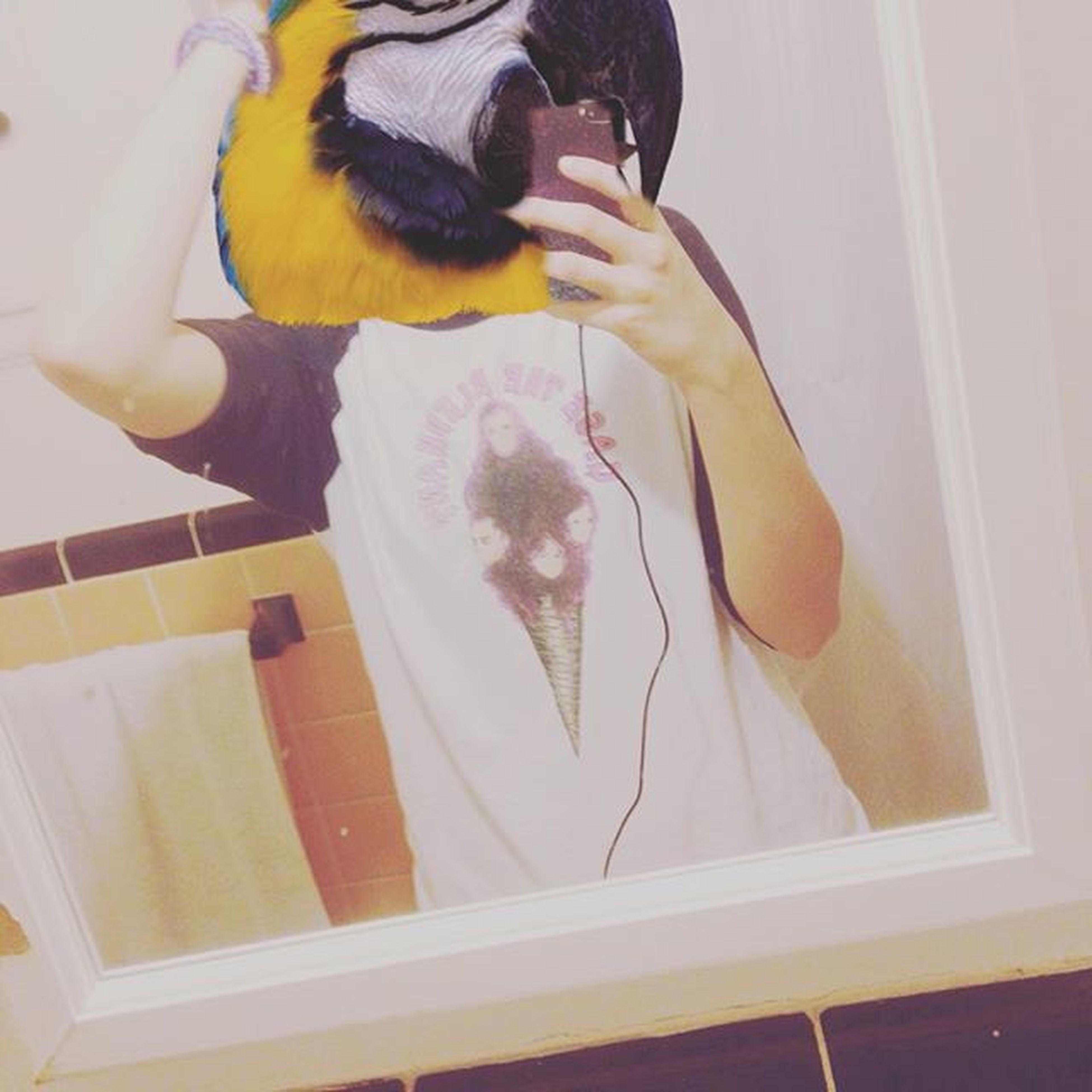 Polly wanna cracker? Mirror Mirrorselfie Mirrorselfie Parrot Bird Parrothead Cagethelephant Selfie Repost Edit Animalhead Animalheadapp