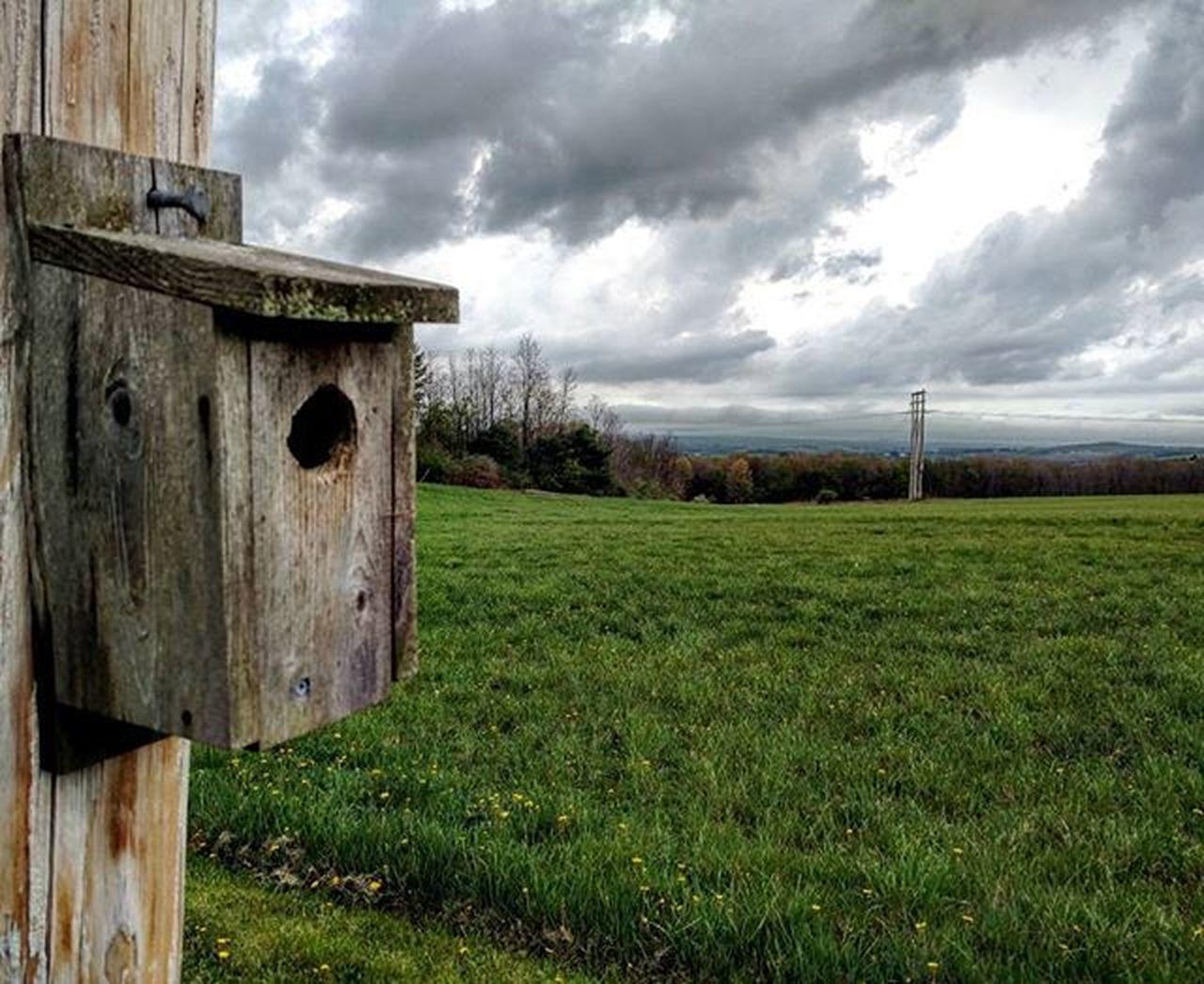 Birdhouse🐦🏠⛅ . . . . . . Nature Outdoors Birdhouse Bird Cloudy Moodygram Illgrammers DOPE GetOutThere Adventure Scenicpa Centralpascenery WesternPA Cool Teampawild Pennsylvania