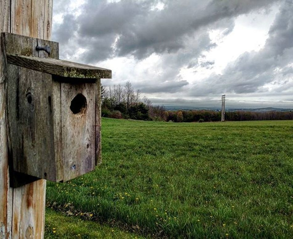 Birdhouse🐦🏠⛅ . . . . . . Nature Outdoors Birdhouse Bird Cloudy Moodygram Illgrammers DOPE GetOutThere Adventure Scenicpa Centralpascenery WesternPA Cool Teampawild Pennsylvania