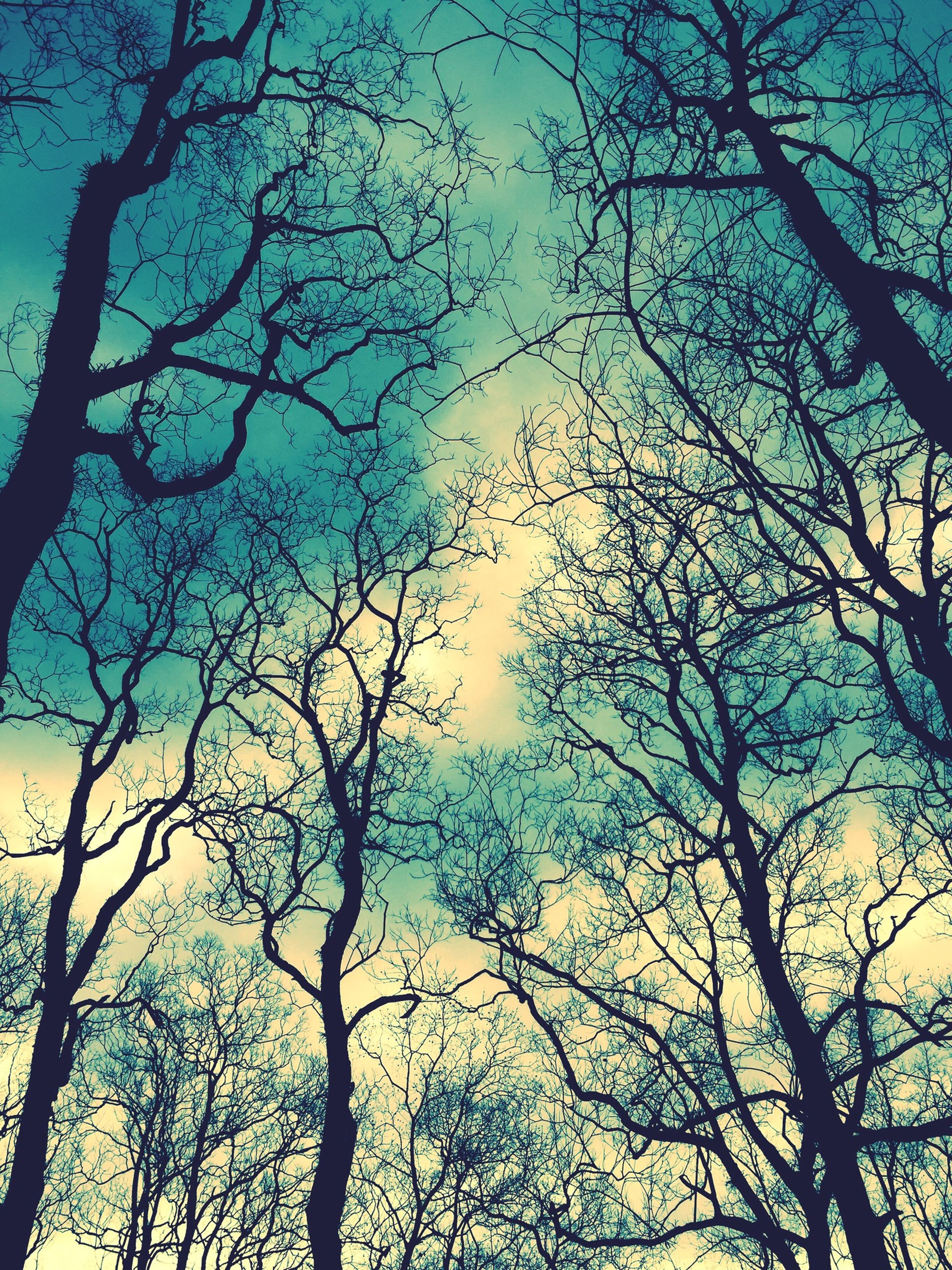 low angle view, branch, bare tree, scenics, silhouette, tree, tranquility, tranquil scene, sky, beauty in nature, tall - high, tree trunk, nature, blue, growth, day, outdoors, tall, non-urban scene, cloud - sky, dried plant, majestic, woodland, treetop, outline