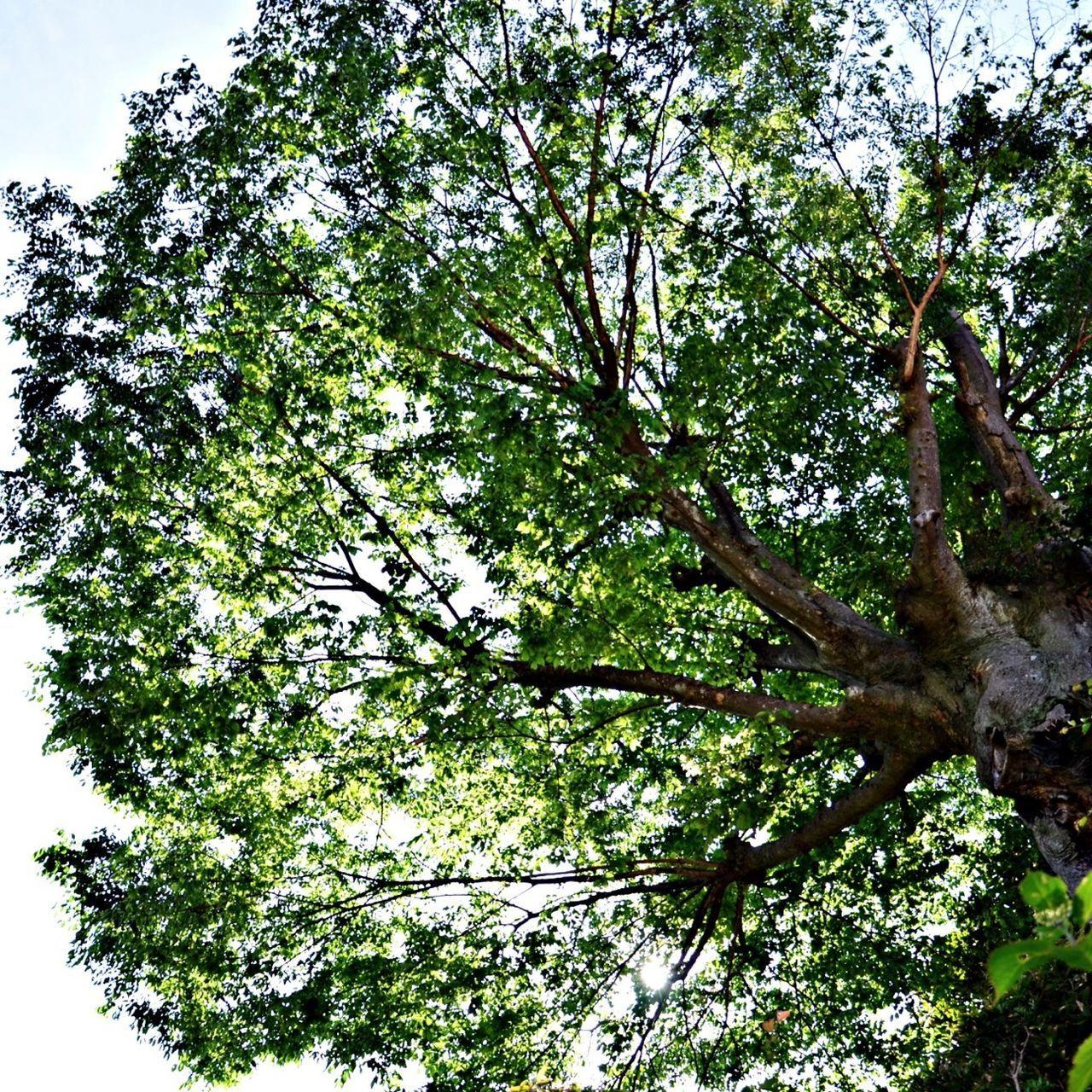 TreePorn Zeniarai Benzaiten Ugafuku Shrine