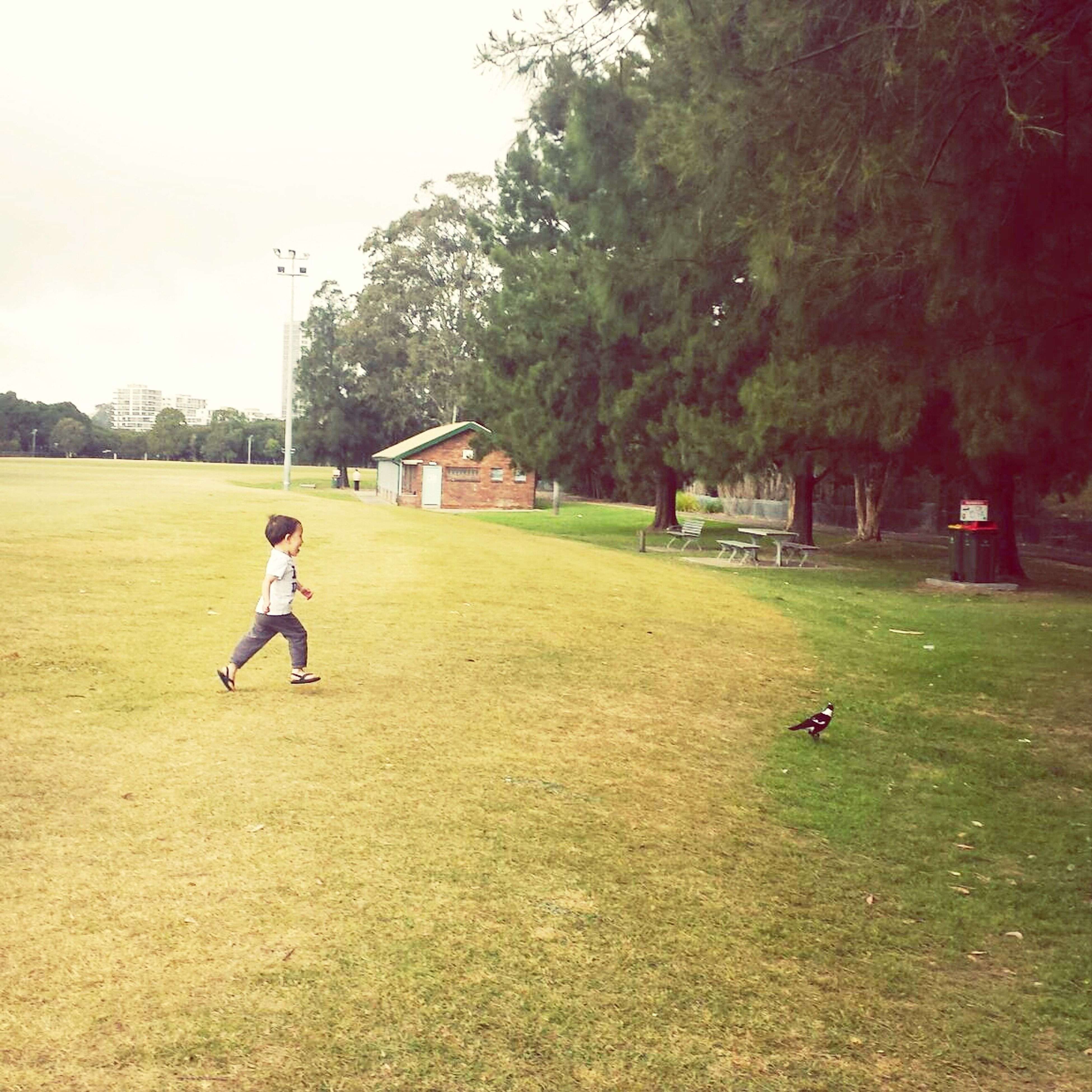 full length, lifestyles, leisure activity, tree, grass, childhood, men, casual clothing, boys, walking, park - man made space, person, girls, field, elementary age, playing, green color