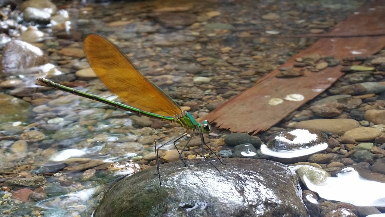 insect, animals in the wild, animal themes, rock - object, one animal, day, close-up, animal wildlife, no people, outdoors, nature