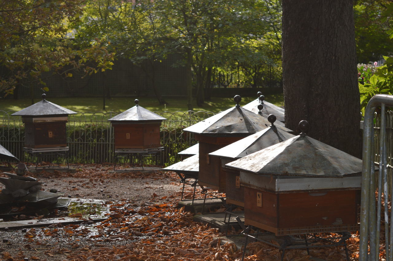 Bee Beehive Beehives Day EyeEmNewHere France Garden Jardin Du Luxembourg Nature Nature Nature Photography No People Outdoors Parc Paris Park Tranquility Tree