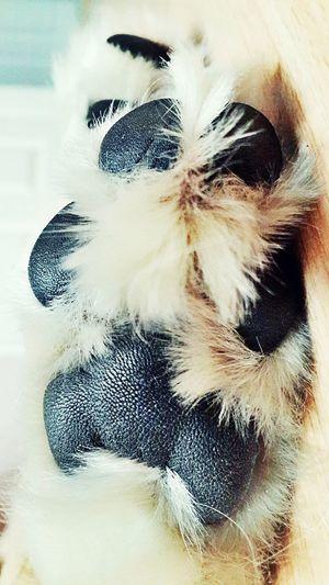I Love My Dog My Love❤