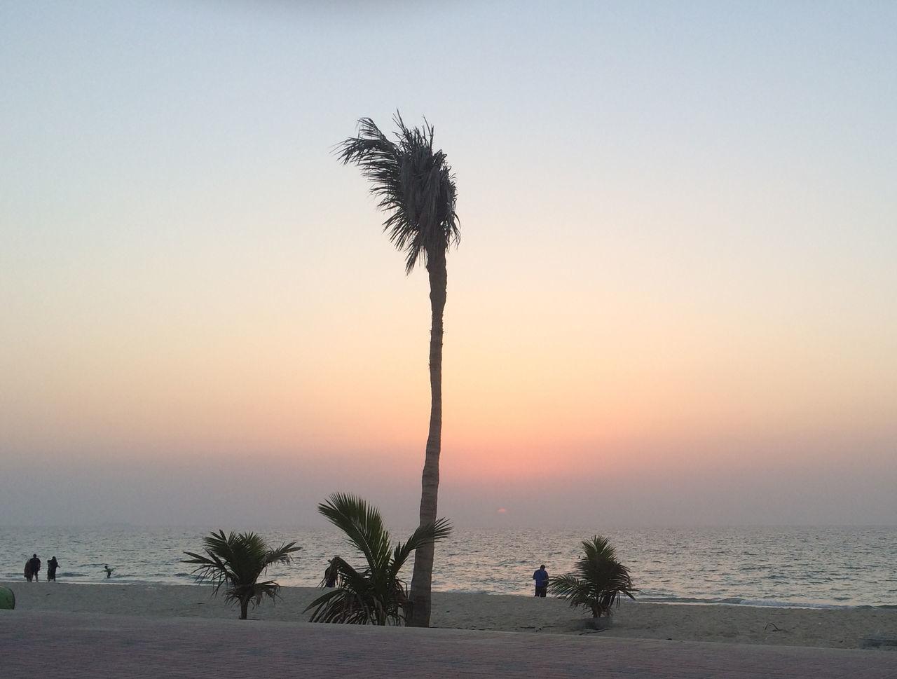 Beach Nature No People Outdoors Palm Tree Sky Sunset Tree