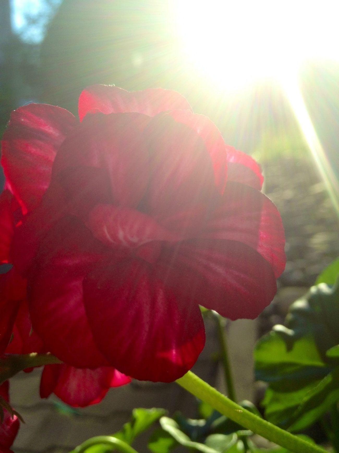 Flowers Light EyeEm Nature Lover