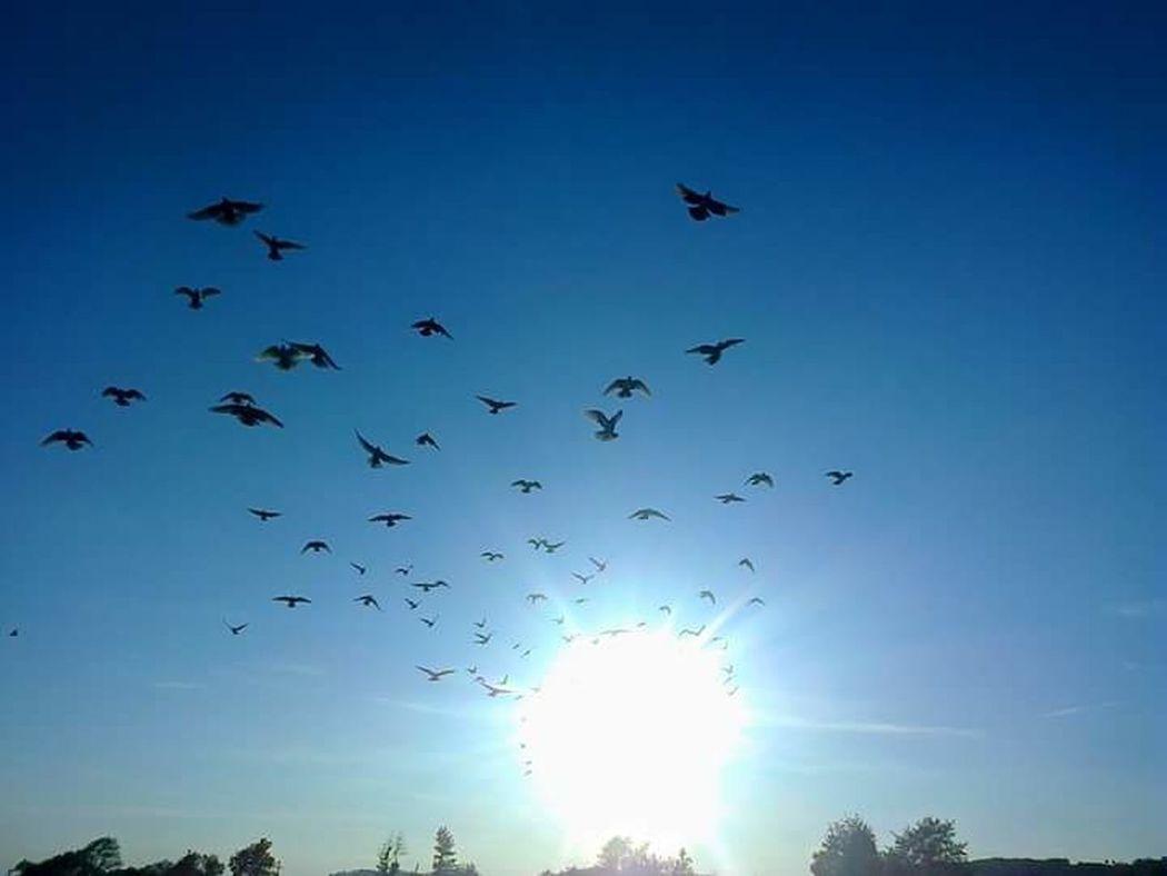 Sign of peace! Pigeon Pigeons Pigeonslife Pigeon Bird  Pigeon Racer Racer Pigeon Pigeon Loft Pigeons Everywhere Pigeons In Flight Pigeons Life Pigeon Bird  Bird Flying Gabrielbzt Peace Peace Birds Peace ✌ Peaceful Birds🐦⛅ Birds Birds Of Prey Birds Lover Pigeons Love Pigeons Everywhere Sky