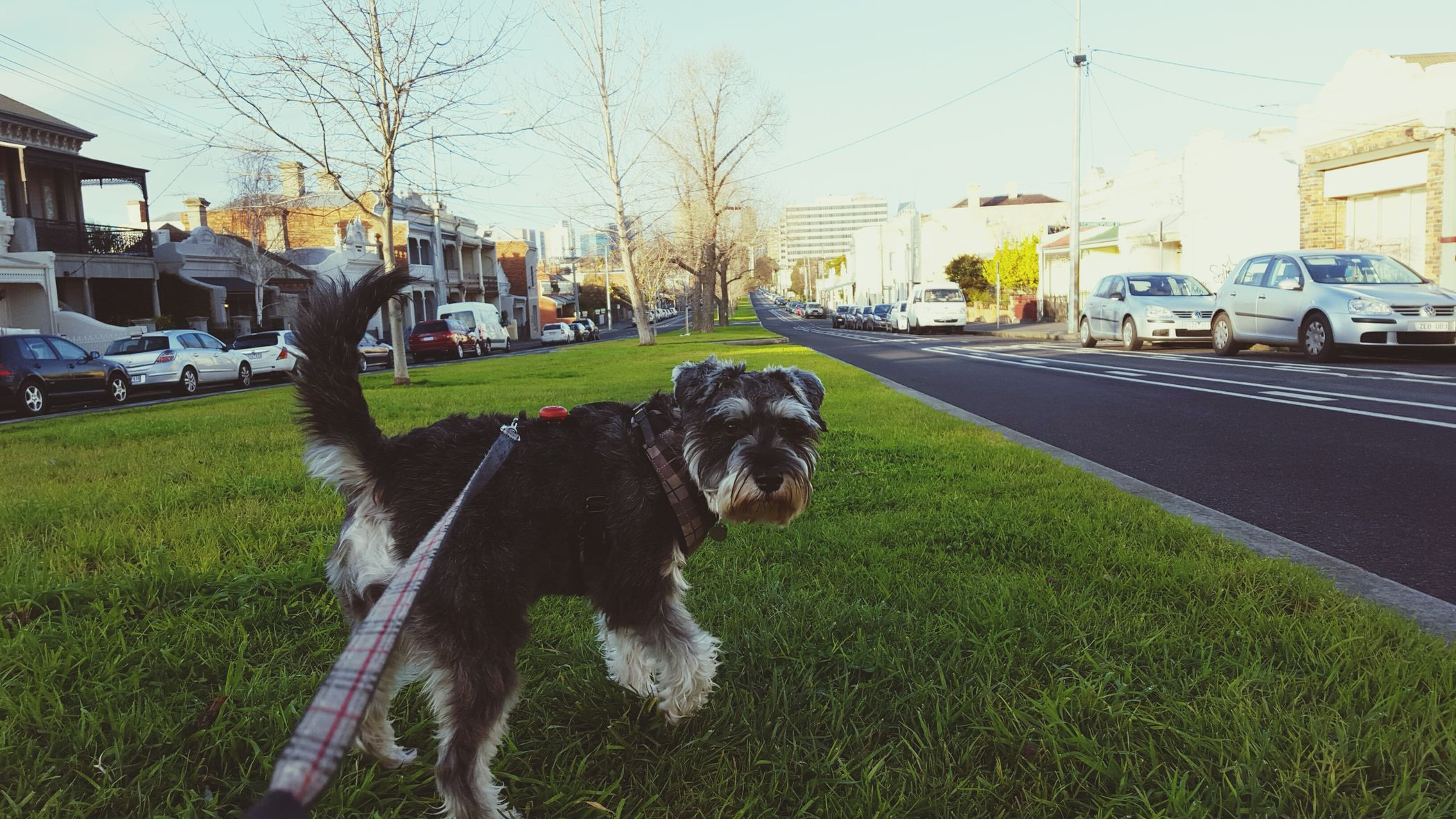Stop interrupting my walk with photos! Dog Walking Cityscapes Morning Light