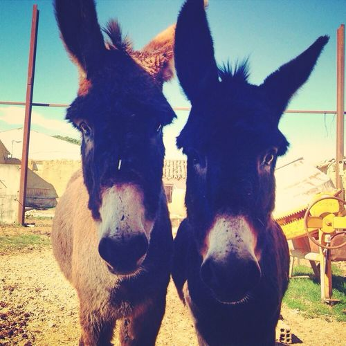 My Donkeys!!!! Crazy Friends