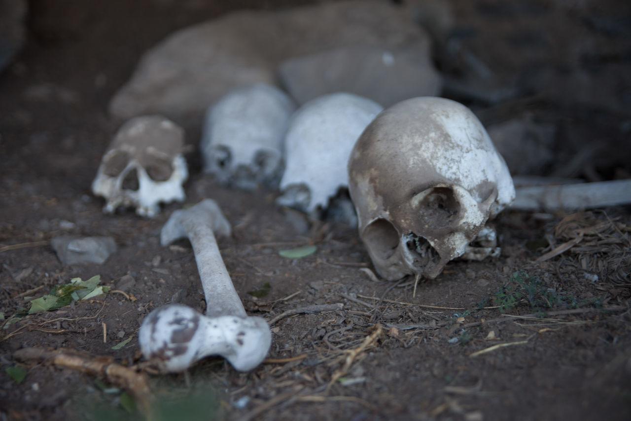 Beautiful stock photos of skull, Archaeology, Bone, Broken, Day