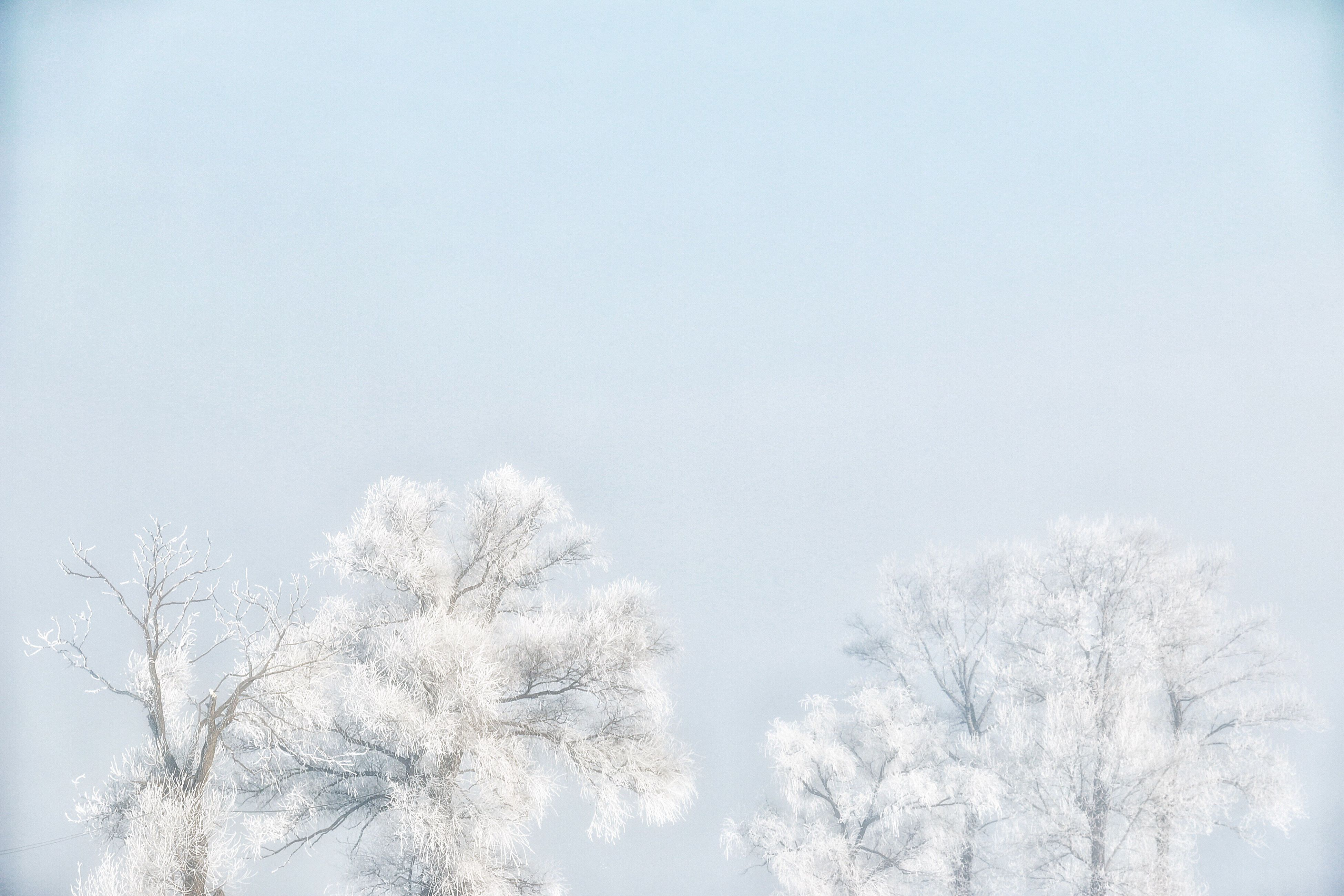 snow, winter, snowflake, cold temperature, sky, tree, nature, no people, beauty in nature, outdoors, snowing, day, christmas, treetop, close-up