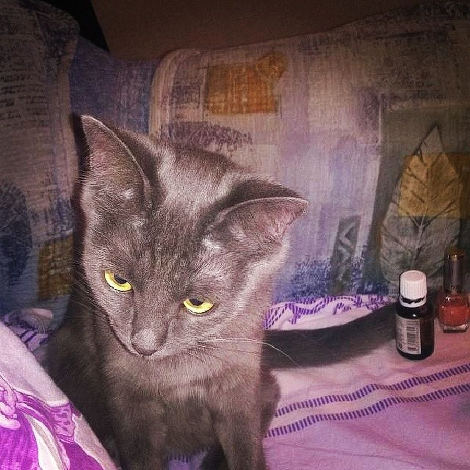 Cat Eyes Gray Pry жужа kazan