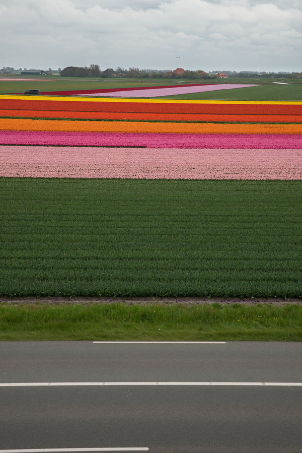 Collors of Holland Agriculture EyeNewHere Netherlands Bert Color Colorful Driebe Flat Holland Horizon Horizon Over Land Noordholland Spring Flowers Springtime Street Striped Tullip