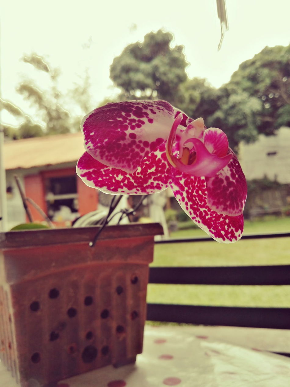 Taken with Huawei Mate S . Colour Of Life Orchid Purple Dots Sunshine